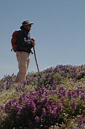 Tony Swan with grape-soda lupine in foreground.
