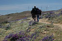 On the descent. Grape-soda lupine in foreground.